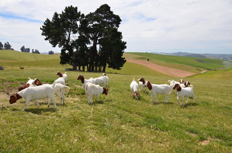 The rolling farmland of Owen and Annette's Elderslie property