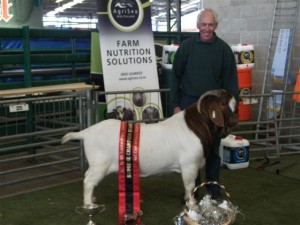 Viking-Supreme Champion Boer Goat